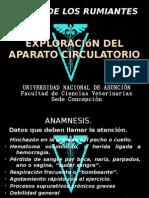 Exploración del aparato circulatorio. RUMIANTES