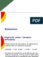 Metabolismo t