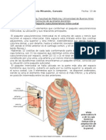 Paquete vasculonervioso intercostal