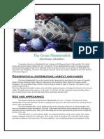 The Green Mandarin Fish (Jenny Lacanilao