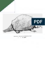 17286893 Glyptodonts of North America