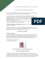 citologia tecidos