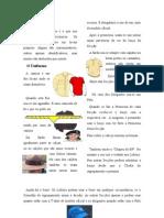 Uniforme e Distintivos
