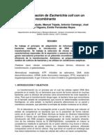 48 TRANSFORMACIÓN E COLI CON PLÁSMIDO RECOMBINANTE