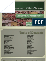Common Ohio Trees