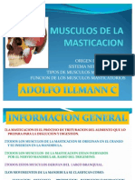 Musculos Maticatorios