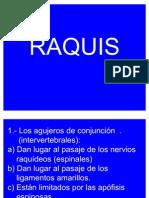 examen01_raquis