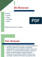 Familia Rosaceae