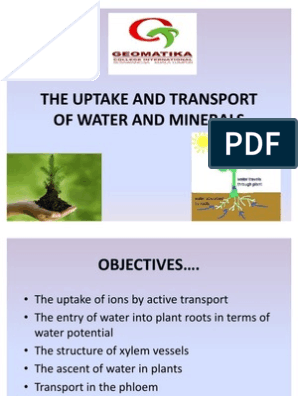The Uptake and Transport of Water and Minerals | Osmosis | Stoma