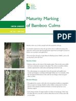 Bamboo_Maturity Marking (1)