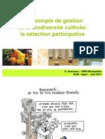 Un exemple de gestion de la biodiversité cultivée:la sélection participative