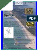 Conhecer para preservar as espécies Herpsilochmus sellowi e Herpsilochmus pectoralis na APA Bonfim-Guaraíra/RN.