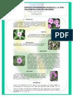 Importância da espécie CATHARANTHUS ROSEUS (L.) G. DON. APOCYNACEAE da cura de cancêres