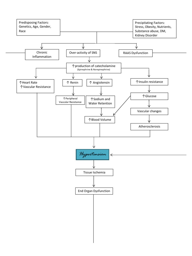 heart diagram sheet pathophysiology of hypertension     diagram      pathophysiology of hypertension     diagram