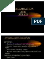 Pathology Inflammation