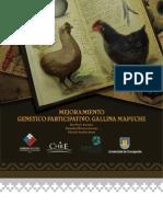 Mejoramiento genético. Gallina Mapuche