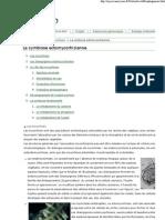 MycorWeb_ La Symbiose Ectomycorhizienne