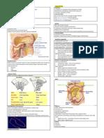 Anatomy of Intestine