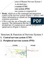 1 Structure and Function of the Nervous System