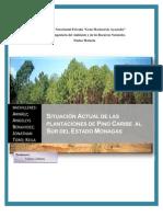 Situacion Actual de Las Plantaciones de Pino Al Sur Del Estado Monagas...