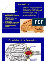 Lect Cerebellum