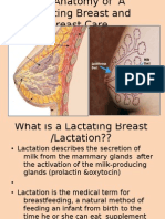 The Anatomy of a Lactating Breast