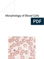 Morphs of Blood Cells