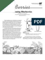 Pruning Blueberries