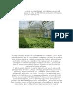 Persoanele fizice şi juridice care desfăşoară activităţi agricole pot să obţină fonduri europene de până la 800