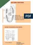 Noções Anatomia dentária