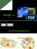 BG 10 - Síntese Proteica