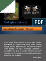 BG 15 - Reprodução sexuada (Meiose)
