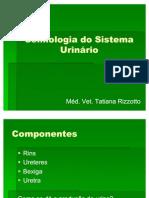 Semiologia do Sistema Urinário