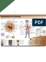Infografía Durmiendo Con El Enemigo - Kassandra Fedalto