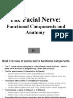 Facial Nerve Animation 01