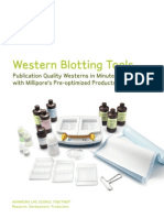 Western Blotting Tools