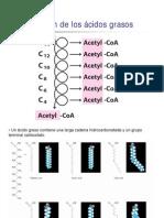 metabolismo de lípidos AG y TG