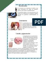 Decoloración del cabello y teoria de la piel
