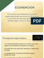 fecundación1