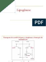 Lipogenese