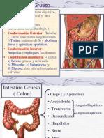 PDF Grueso