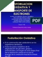 Cadena de Trasporte y Fosforilacion Kk
