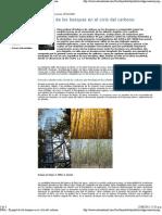 INRA - El Papel de Los Bosques en El Ciclo Del Carbono