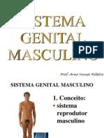 SistemaGenitalMasculinobiol.impressao