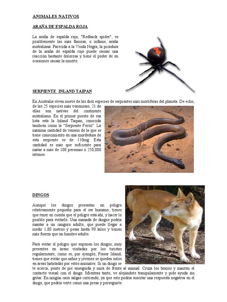Animales Foraneos Del Peru