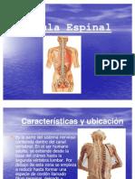 medula_espinal