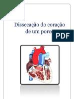 Dissecação do coração de um porco