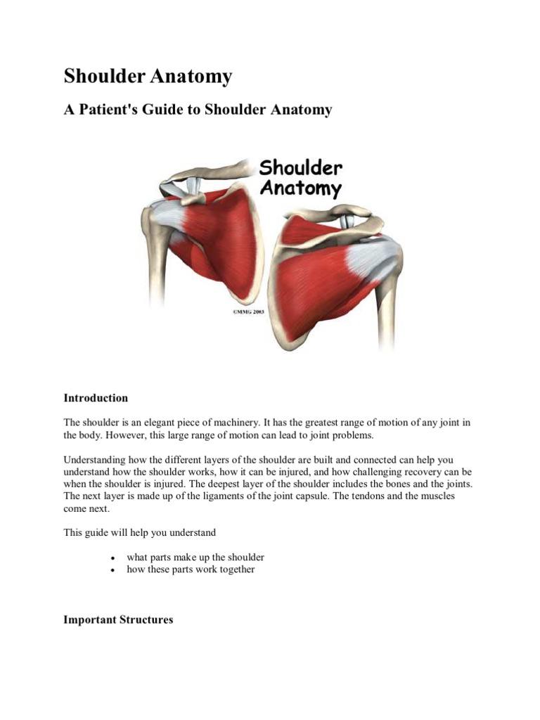 Shoulder Anatomy | Shoulder | Arm