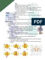 Sodium - Potassium ATPase