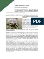 Cuidados y alimentación de tortugas